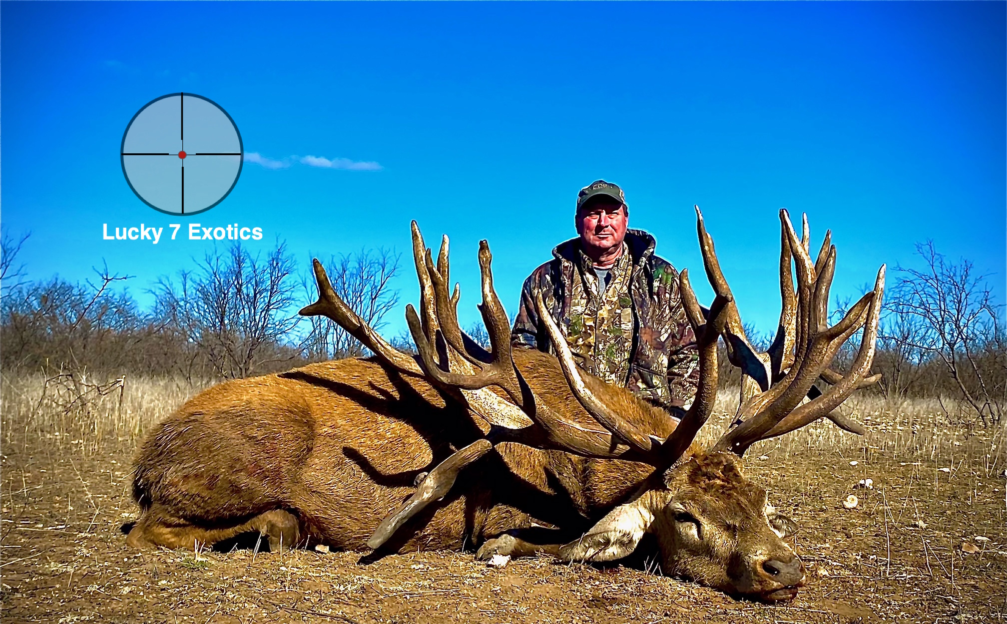 Red Stag Hunts Texas