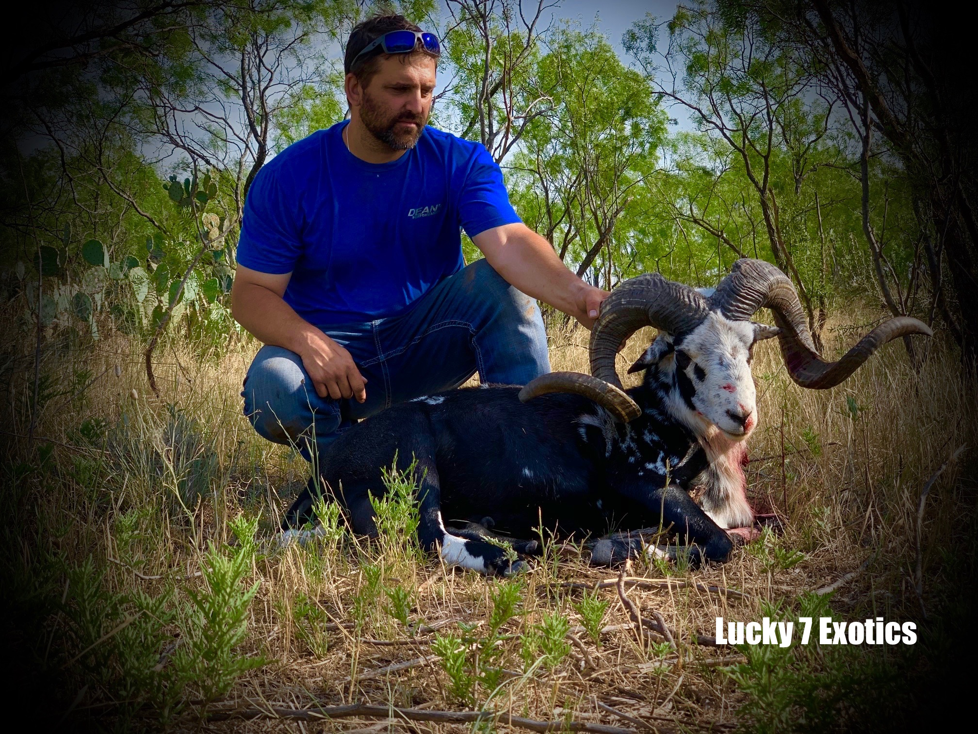 Trophy Ram Hunts Texas
